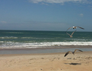 bird watching Outer Banks