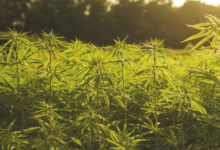 Sustainable Hemp Industry Looks to Future at RC&D Meeting